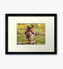 Hilarious Giraffe - Nature Photography Framed Print