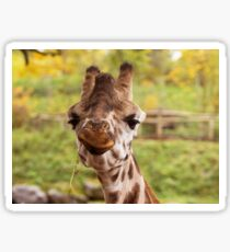 Hilarious Giraffe - Nature Photography Sticker