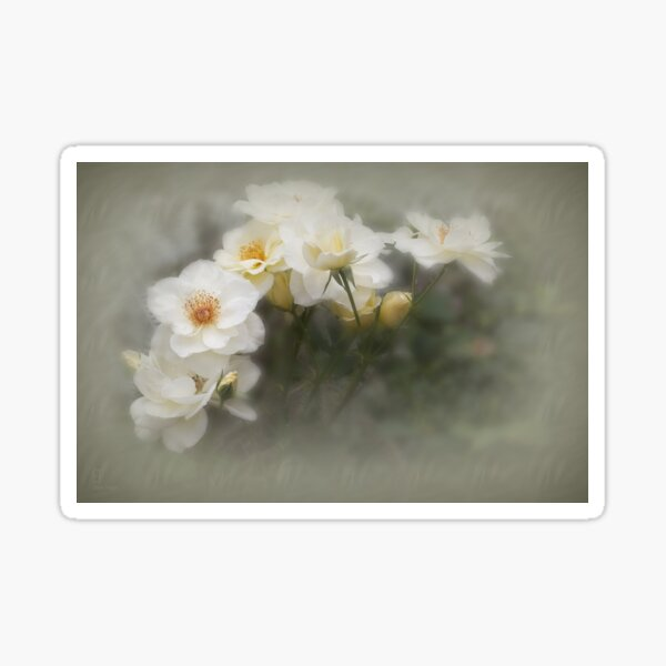 White Roses #2 Sticker