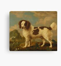 George Stubbs - Brown and White Norfolk or Water Spaniel 1778 Canvas Print