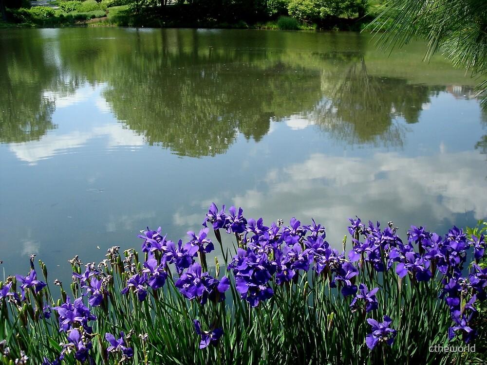 Irises at the Lake     ^ by ctheworld