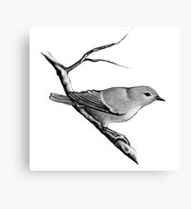 Cuckoo Bird in Pencil: Wildlife Art Canvas Print