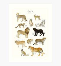 Wilde Katzen Kunstdruck
