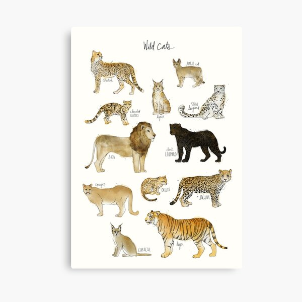 Wild Cats Canvas Print
