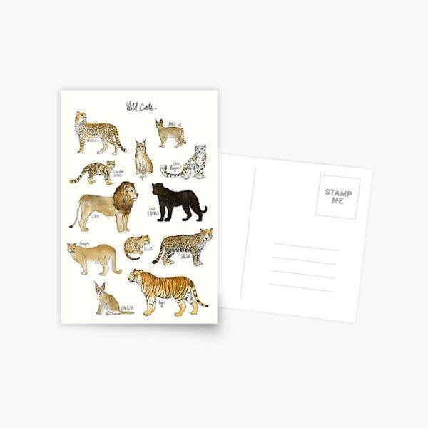 Wild Cats Postcard