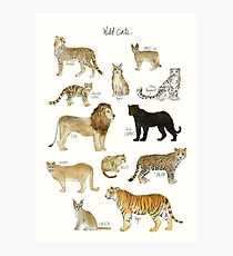 Wild Cats Photographic Print