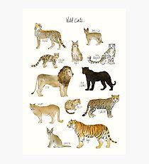 Lámina fotográfica Gatos salvajes