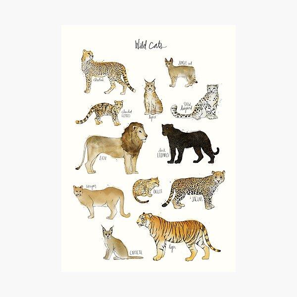 Wild Cats Photographic Print