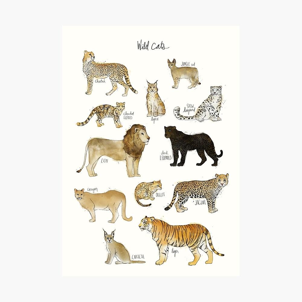 Wilde Katzen Fotodruck