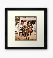 Rodeo Cowboy Riding a Wild Horse Framed Print
