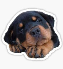 Rottweiler Puppy Sticker