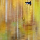 On golden pond by Laurie Minor