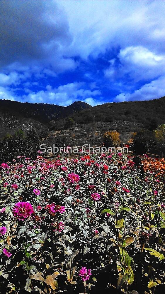 Flower Field by Sabrina Chapman
