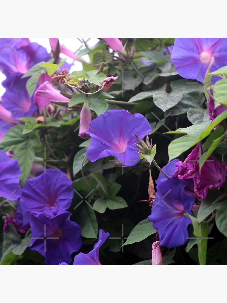 Spring Morning Glories in Blue by ButterflysAttic