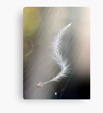 Hanging by a Spider's Thread Canvas Print
