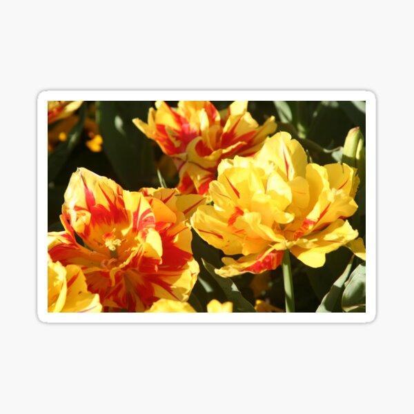 Tulips 3 Sticker