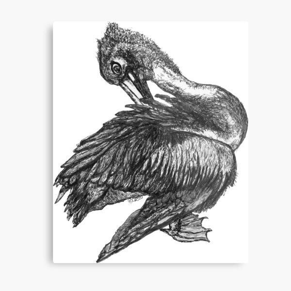 Percephone the Pelican Metal Print
