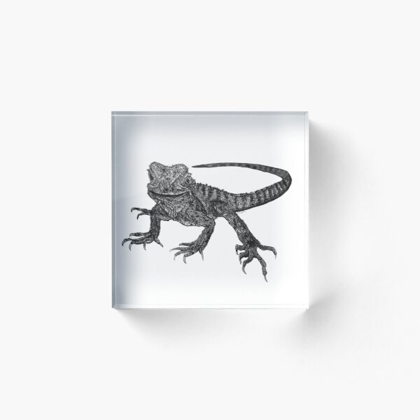 Kenneth the Water Dragon Acrylic Block