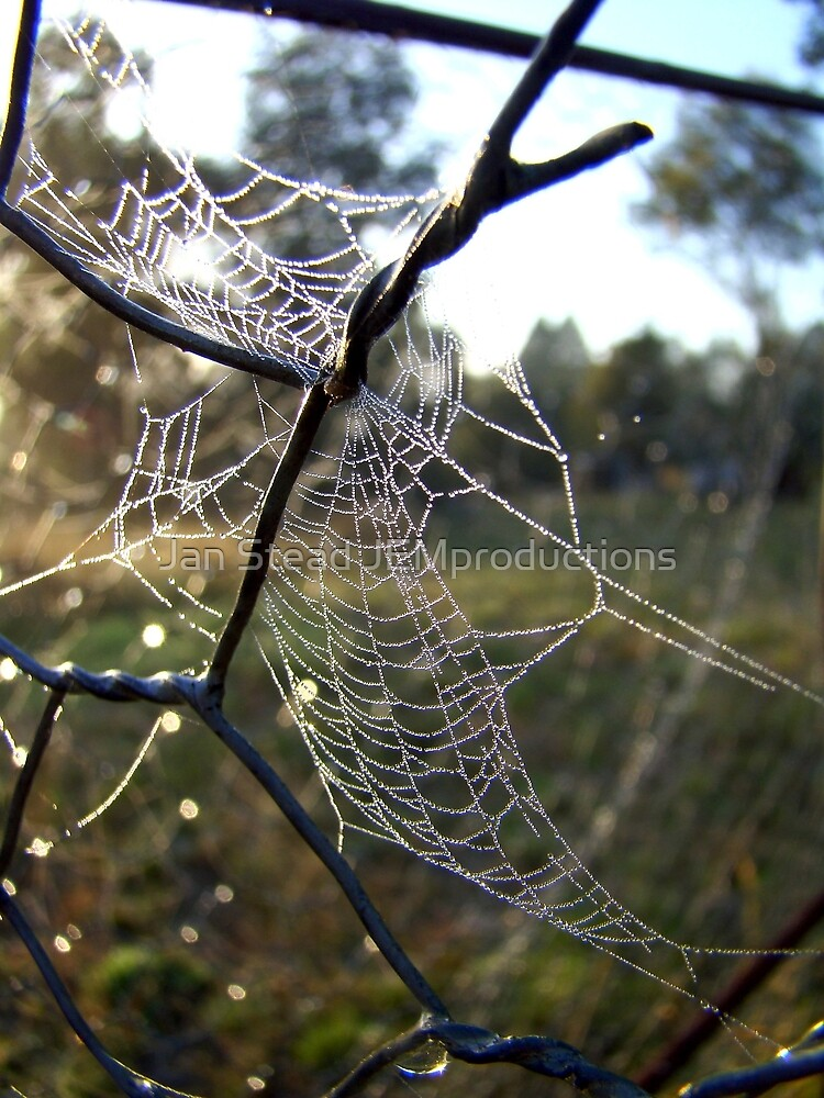 web of intrigue by Jan Stead JEMproductions