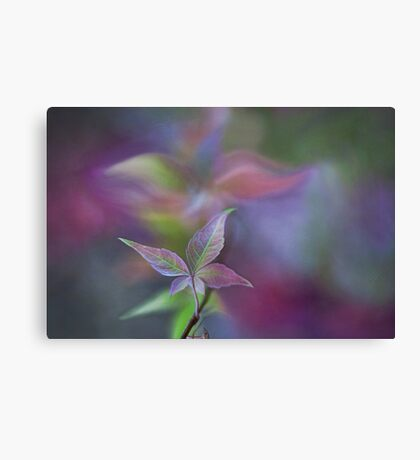 Echo in time Canvas Print