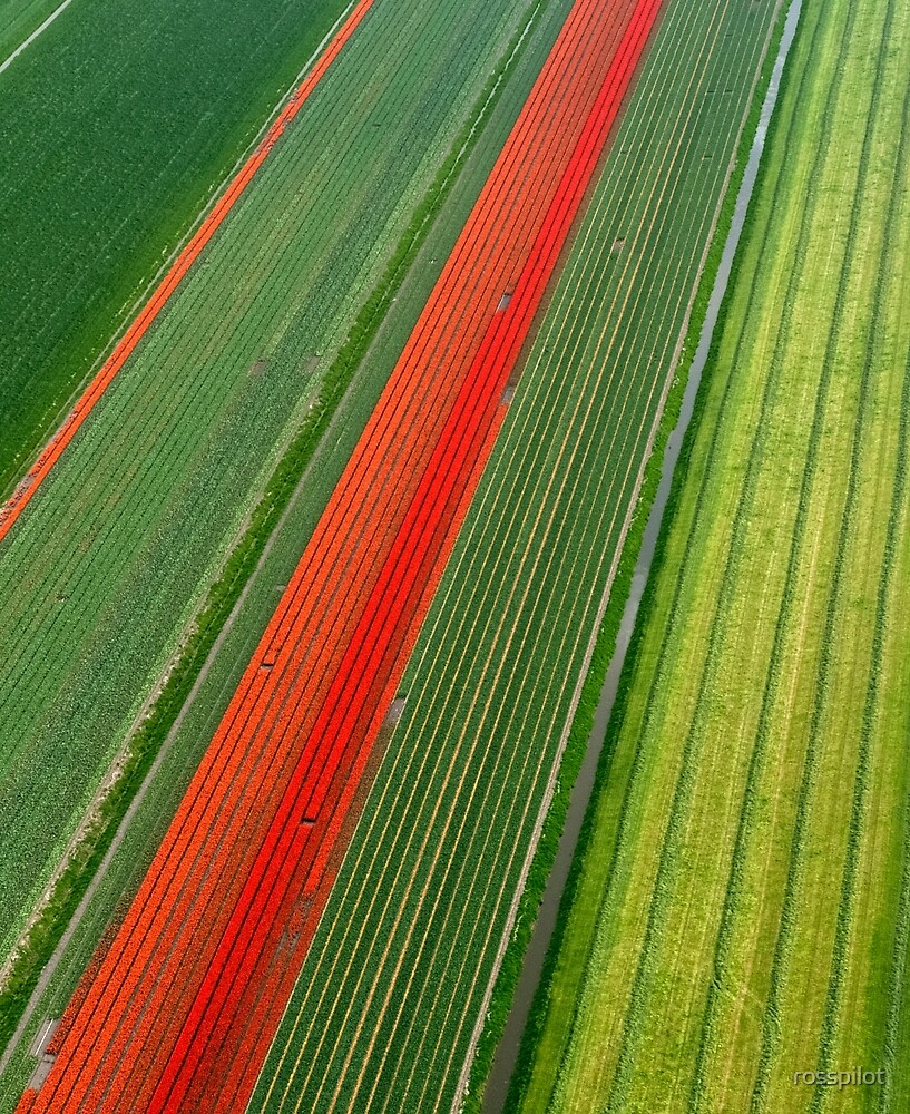 Tulip Field by rosspilot