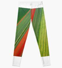 Tulip Field Leggings