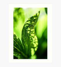 breath II  (green leaf) Art Print