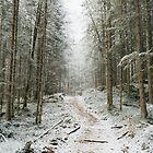 Trees trees trees landscape photography by Michael Schauer