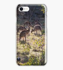 Kangaroos and Magpies - Canberra - Australia iPhone Case/Skin