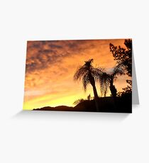 A CREAMY CLOUDY SKY AT SUNSET THRU THE QUEEN PALM Greeting Card