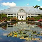 Greenhouse - The conservatory by Michael Savad