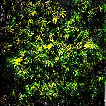 Cannabis Hemp by Nate4D7