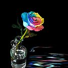 Rainbow Rose by Maria Dryfhout