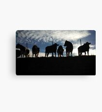 Cows Hanging Out. Canvas Print