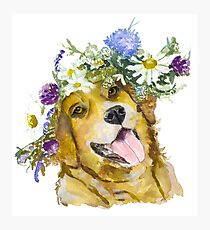 Dog with flowers. Photographic Print