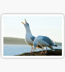 Song of the Seagulls Sticker