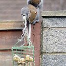Maybe this food? in a Peebles garden feeder by rosie320d