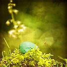 Robins Ei und Moos von Peggy Collins