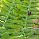 Lady Bug on Fern by LauraZim