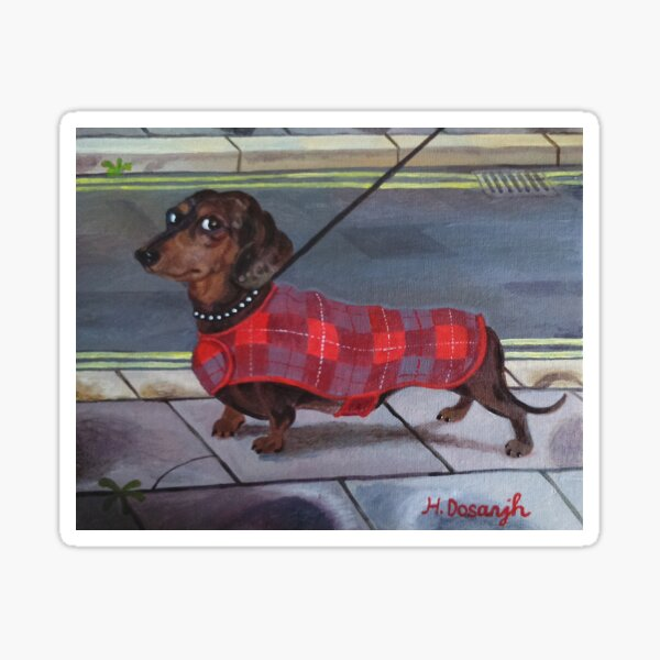 Dachshund going for a walk. Sticker