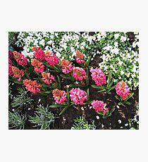 Deep Pink Hyacinths - Keukenhof Gardens Photographic Print