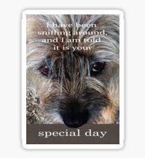 special day,Border terrier, sniffing around, humor  Sticker
