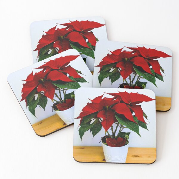 Pot Plant Coasters Redbubble