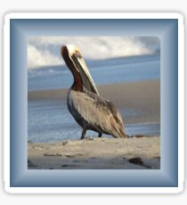 Oceanside Portrait of a Pelican Sticker
