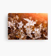 Blossoming Garden Canvas Print