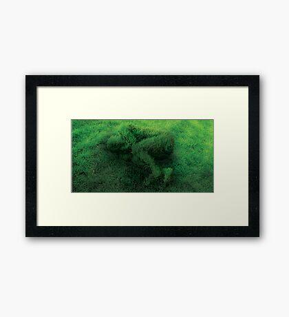 Sleeping On Grass Framed Print