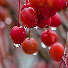 Wet Cherries by Tom Gotzy