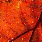 Autumns Color by Tom Gotzy