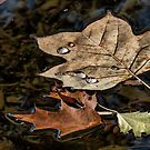 Autumn Leaves In A Pond by Tom Gotzy
