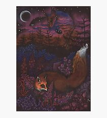 Twilight Fox Photographic Print